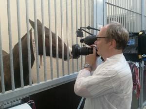 Interview-eines-Polo-Pferdes